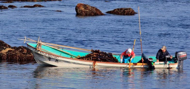 豊かな海産物
